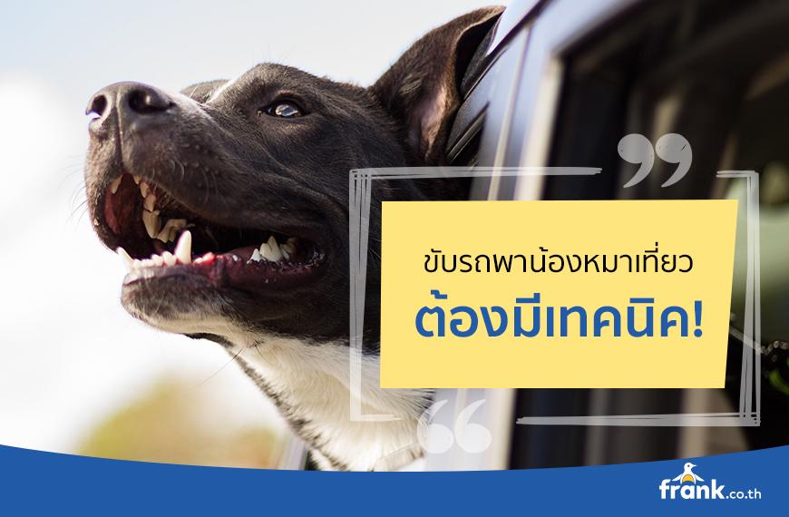 ขับรถพาหมาเที่ยว