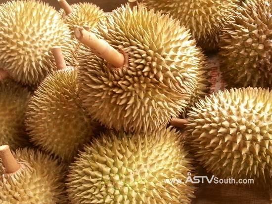 Durian-sarika