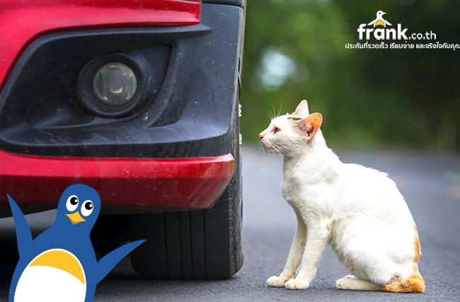 เคลม-ประกันรถยนต์-ได้ไหม-ถ้าขับรถ-ชนสัตว์เลี้ยง