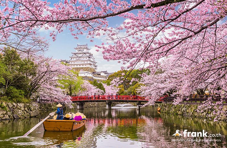 ดูซากุระปราสาทชิเมจิ