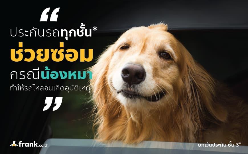 กรณีน้องหมาเป็นเหตุให้รถชน ประกันคุ้มครองไหม??
