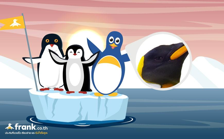 วิธีเอาตัวรอดของเพนกวิน