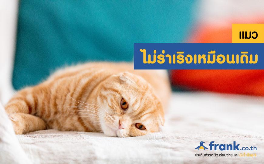 อาการแมวป่วย