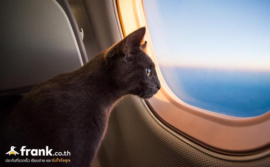 สัตว์เลี้ยงขึ้นเครื่อง